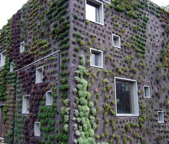Living walls in the Netherlands-vertical garden