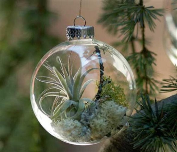 Wonderful Decorations Ornaments Tree With Natural Plant
