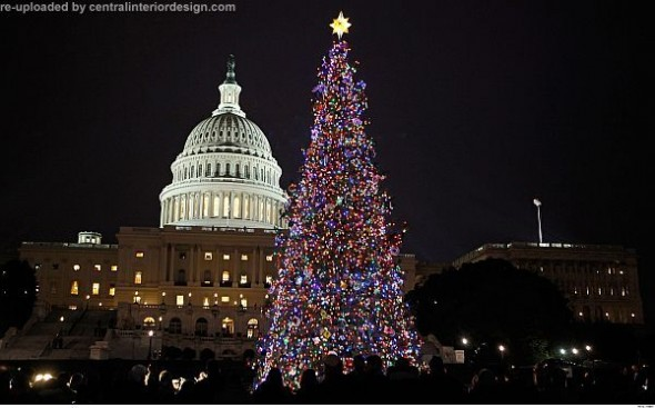 Christmas tree at the U.S. Capitol-decorating Christmas