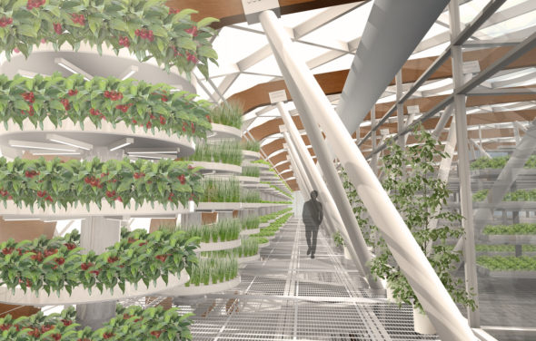 Vertical Farm GRAFTED GROWTH